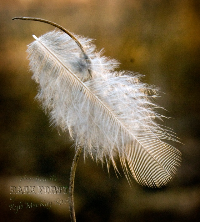 Back_Forty_Winter2012_7010-feather