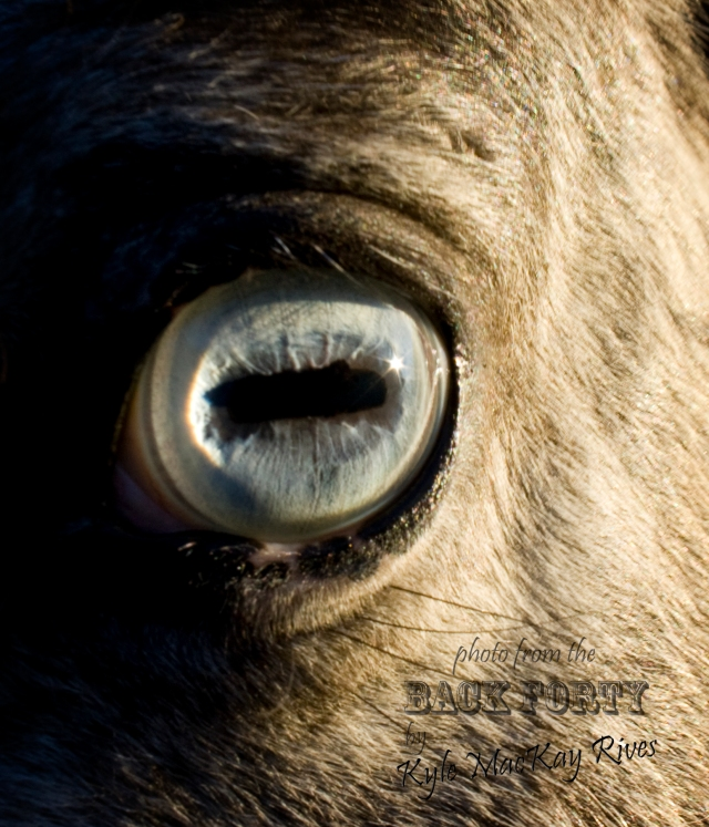 Back_Forty_Winter2012_7085_Blaze'sEye