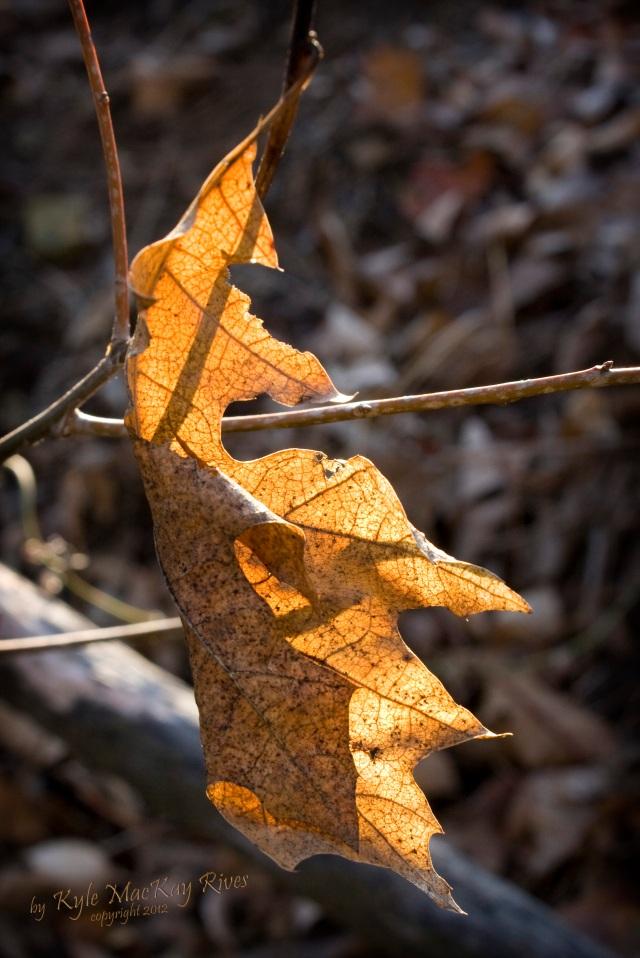 Back_Forty_Winter2012_7955-leaf