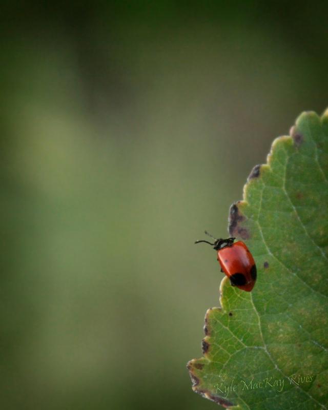 redbug-02A