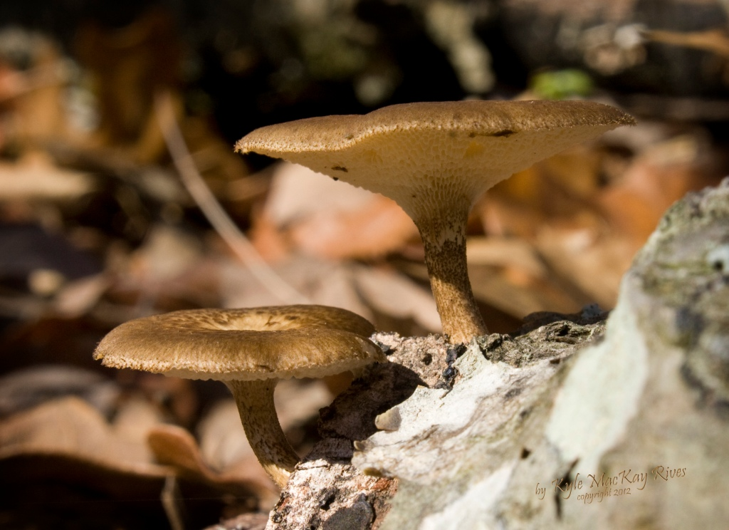 Back_Forty_Spring_2012_9554_mushrooms