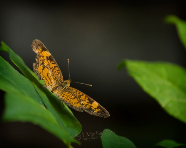 Back_Forty_Spring_2012_0890_Moth