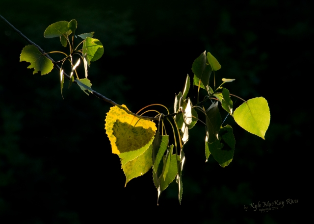 Back_Forty_Summer_2012_0027_leaves