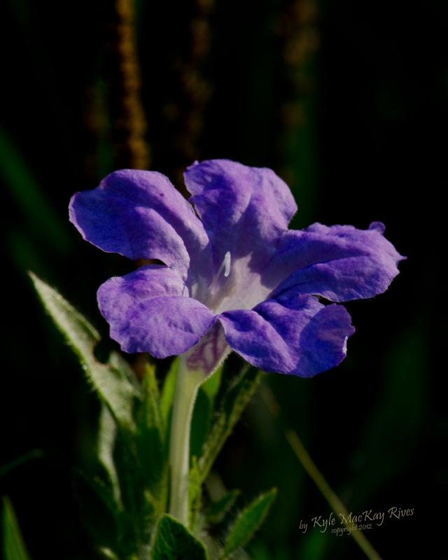 Back_Forty_Summer_2012_0078_purple_flower