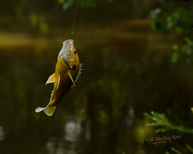 Back_Forty_Summer_2012_0107_fish