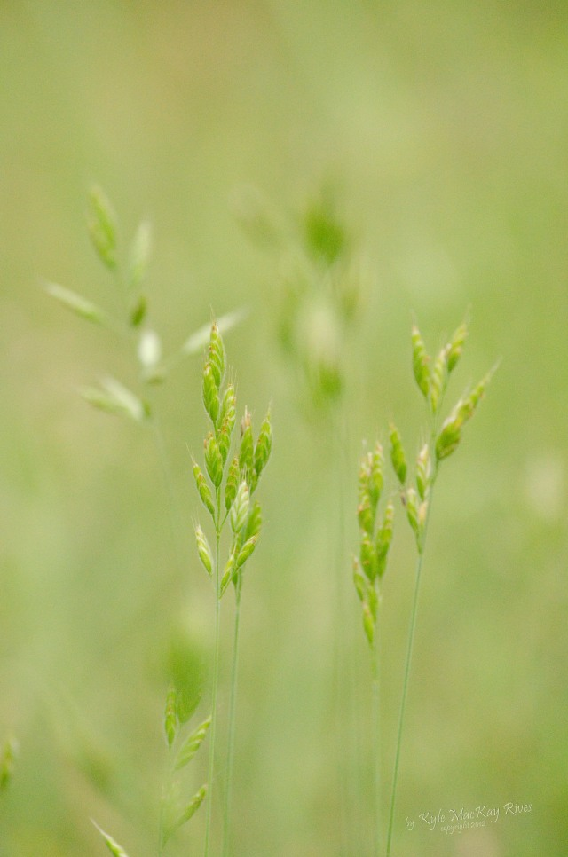Back_Forty_Spring_2012_Nikon__0206_grass