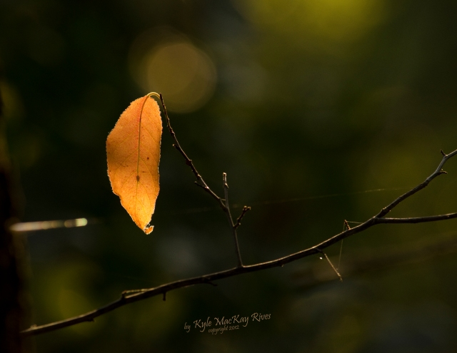 Back_Forty_Summer_2012_0396_Leaf