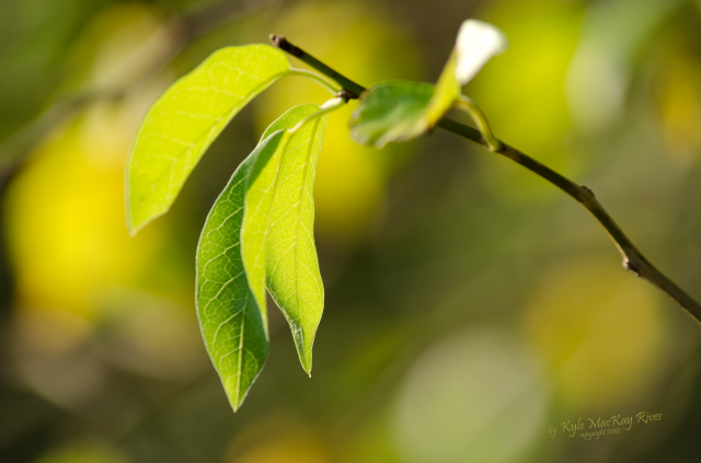 Back_Forty_Summer_2012_0411_leaves