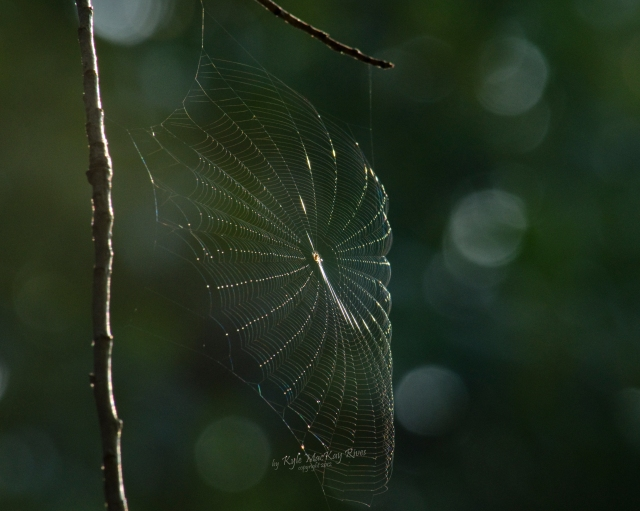 Back_Forty_Summer_2012_0577_spiderweb