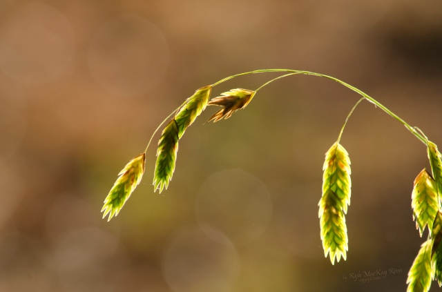 Back_Forty_Summer_2012_July_21_0836_Grass