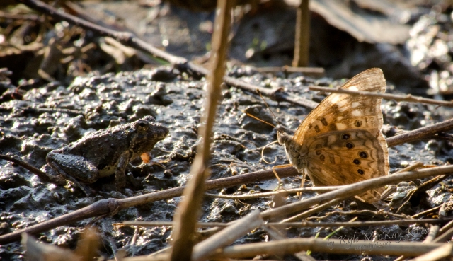 Back_Fory_Summer_2012_July_22_0938_toad_butterfly