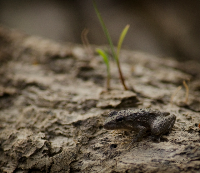 Back_Forty_Summer_2012_0533_frog