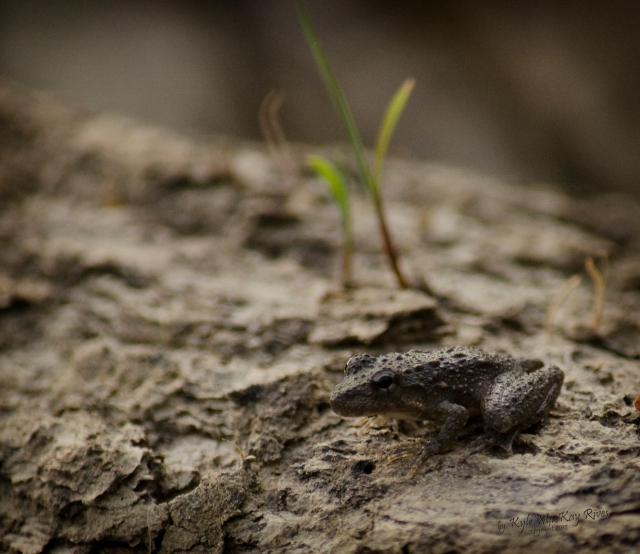Back_Forty_Summer_2012_0533_frog
