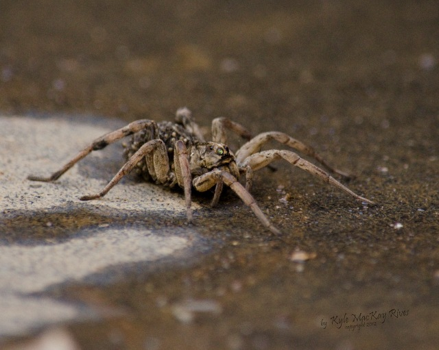 Back_Forty_Summer_2012_August_0955_spider