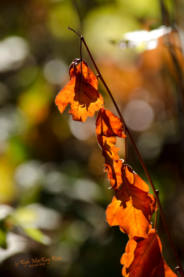 Back_Forty_Summer_2012_August_0970_orange_leaves