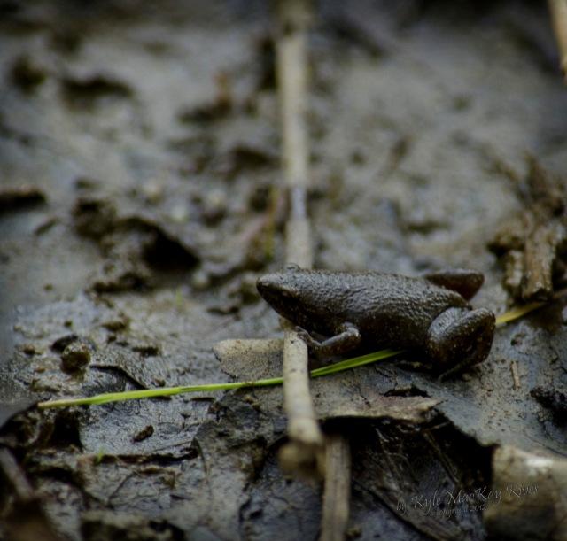 Back_Forty_Summer_2012_July_21_0865_frog