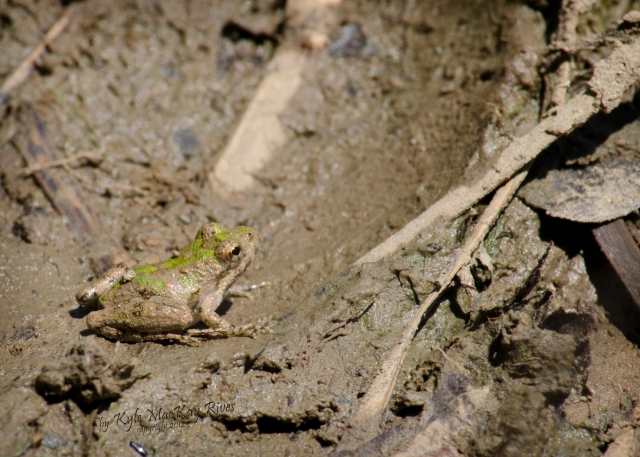 Back_Forty_Summer_2012_July_21_0888_frog