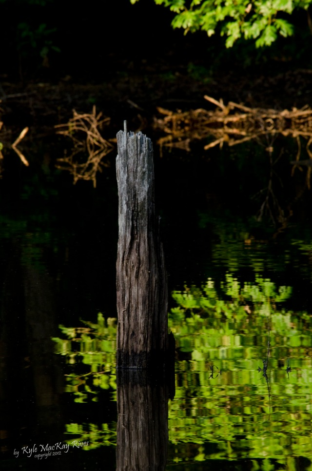 Back_Forty_Summer_2012_0026_stump_in_pond