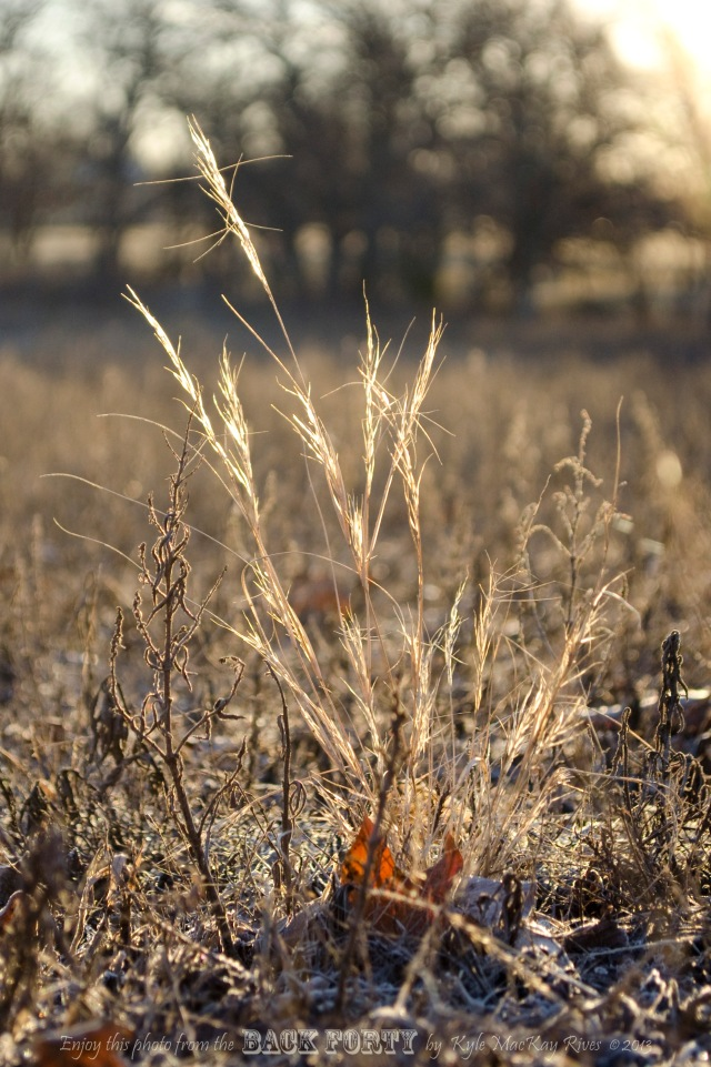 The Gilded Grasses